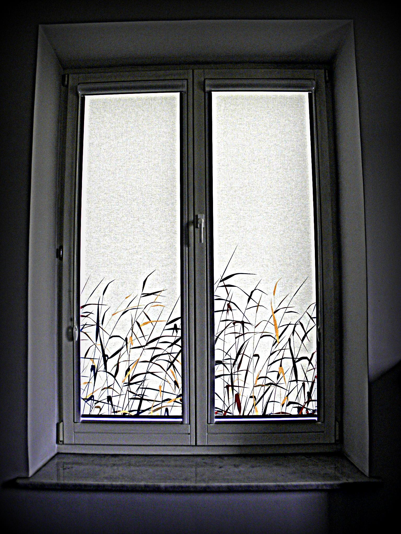 Fotoroleta - źdźbła trawy
